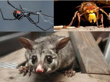 Pest management services