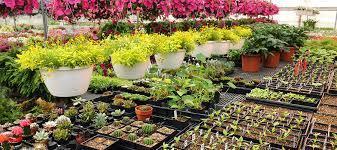 nursery-plants-lifestyle-0