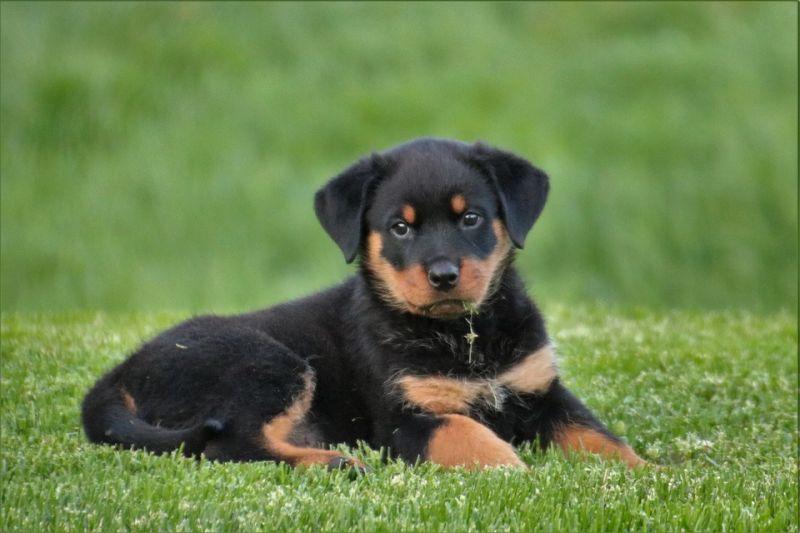 Established Dog walking and pet-sitting business for sale in Sydney - Inner West