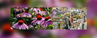 Health Shop / Naturopath For Sale Gold Coast | Robina