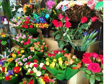 Florist **$8,000 Weekly Sales** REFZ1870