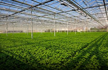 Excellent Wholesale Production Nursery on NSW Central Coast - Property and Busin
