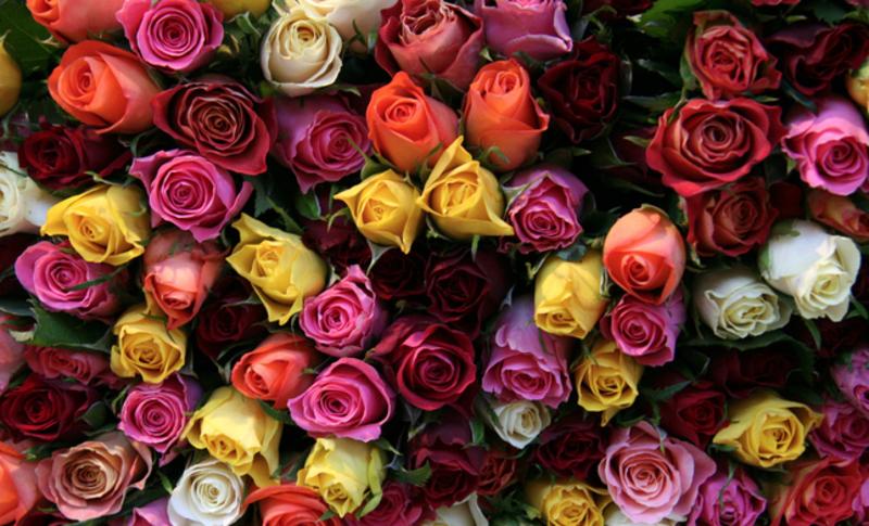 Award Winning Central Coast Florist Giftware $70K - UNDER OFFER!