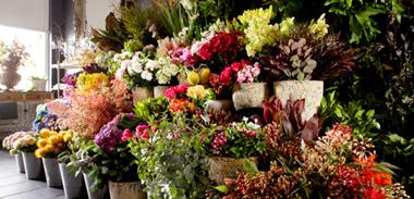 Business Fro Sale: Florist in the heart of Camberwell.