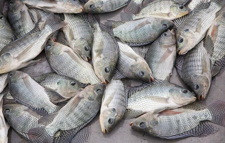 High Turnover Fresh Fish and Seafood Business (AM)