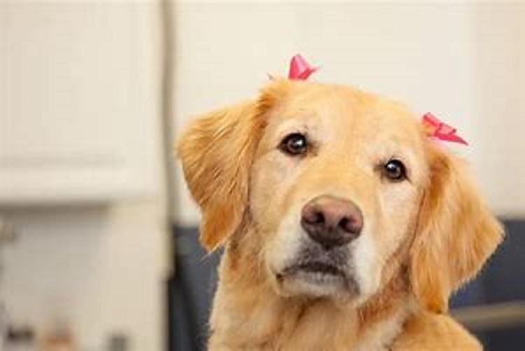 Large Independent Pet Store - BAYSIDE $550k + SAV