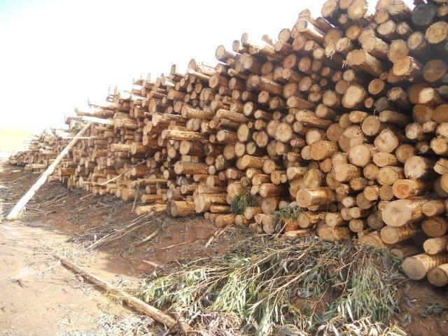 Tasmanian Plantation Logging Operation,  Net Profit $1m+ Roi 29%