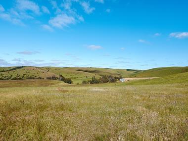 callington-quarry-mine-tenement-121ha-300-acres-approx-4