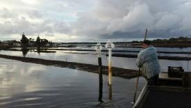 Long-Established Sydney Rock Oyster Retail- Wholesale Business For Sale - Sydney