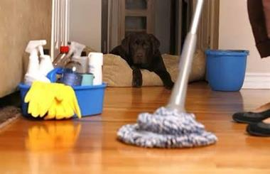 HOME CLEANING BUSINESS -- CLAYTON -- #3925321