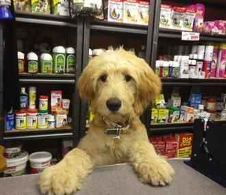 PET SHOP/PET SUPPLIES -- RINGWOOD -- #3985290