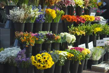 Unique Opportunity to own Profitable Flower Stall in the heart of Sydney CBD