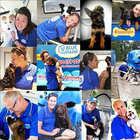 Urgent sale of Blue Wheelers Dog Grooming bus. to ill health!  $20,000 - opp+++
