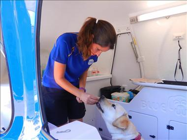 dog-lover-join-aussies-1-choice-in-mobile-dog-grooming-earn-up-to-2000-p-w-5