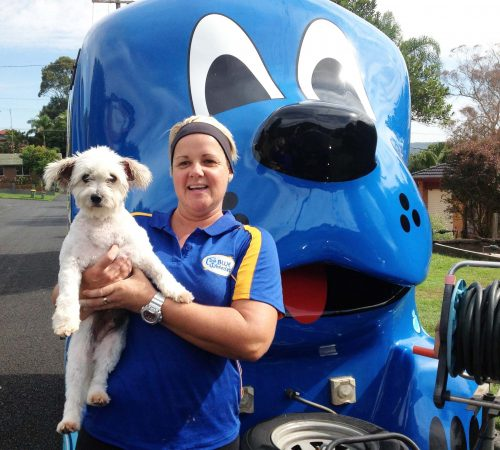 URGENT!  Wyoming, NSW Dog Lover?  Dog Grooming business for sale $32,000 Opp +