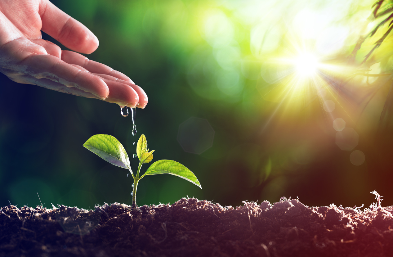 Certified Organic Fertilizer Manufacturer Net $700k