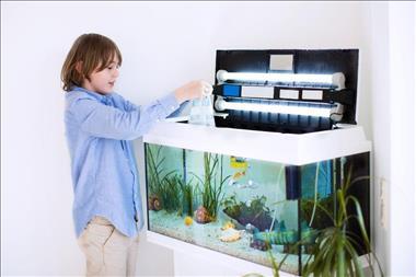 retail-aquarium-north-qld-business-for-sale-3023-3