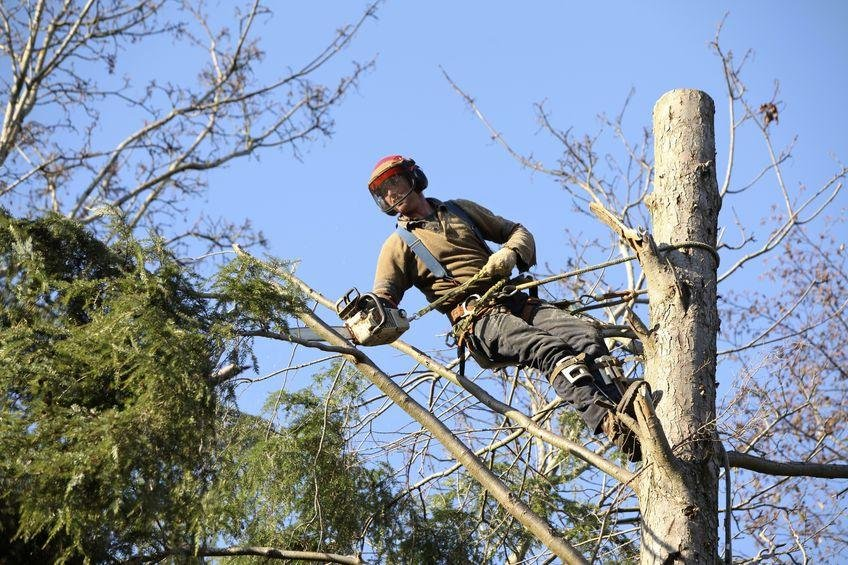 Tree Services Western Suburbs - Business for Sale #9029