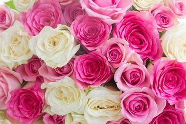 Florist Business For Sale - Make Money Online With Flowers - PRICE REDUCED! Ref: