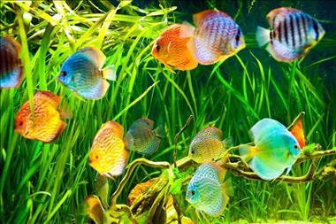 retail-aquarium-north-qld-business-for-sale-3023-0