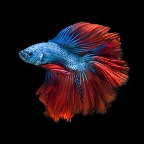 retail-aquarium-north-qld-business-for-sale-3023-2