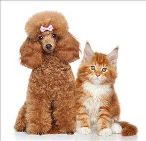 Brisbane Bayside Pet Grooming Salon Business for Sale #2973