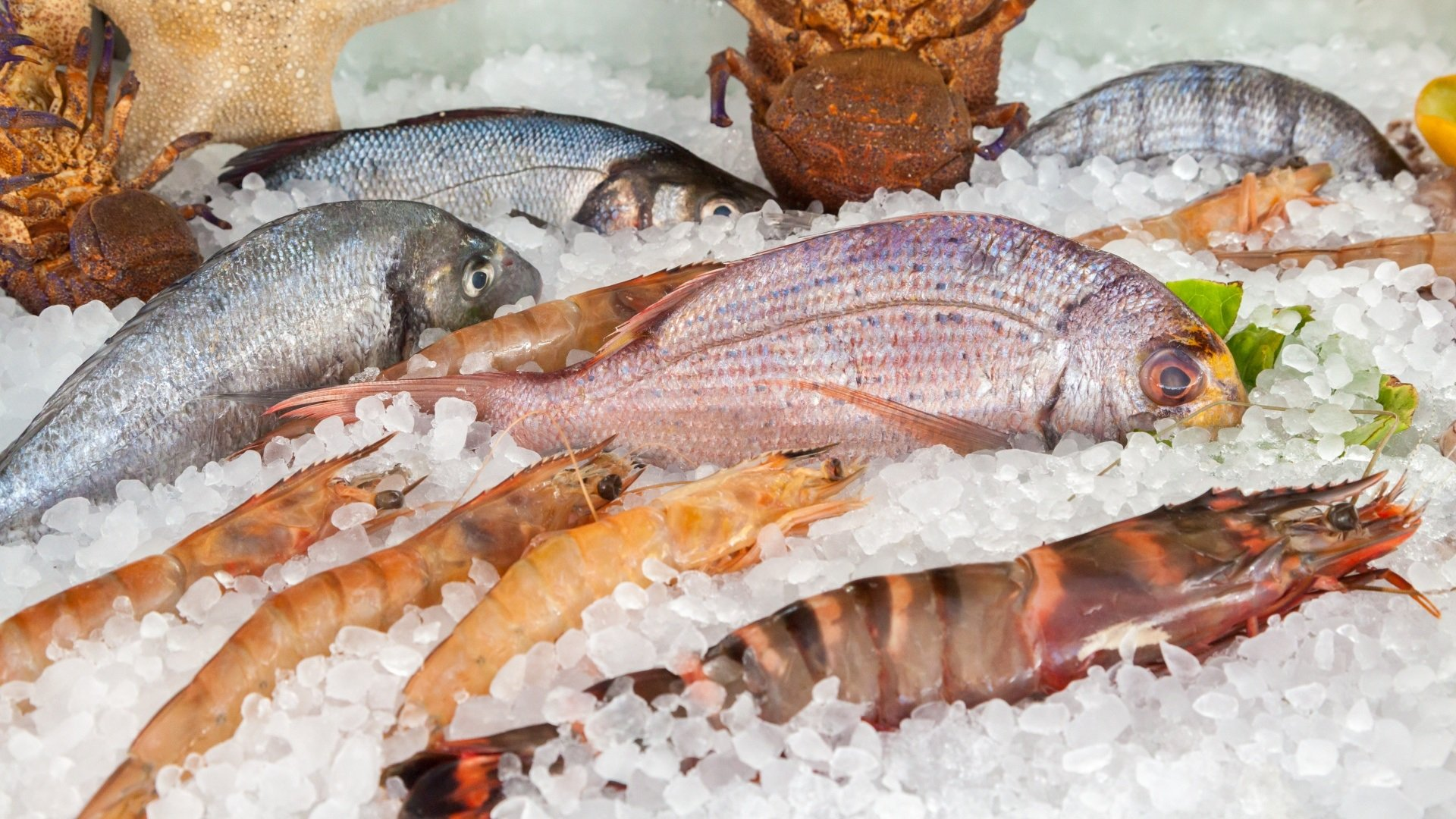 Independent Fresh Seafood and Hot Food Retail Shop – Brisbane Northside