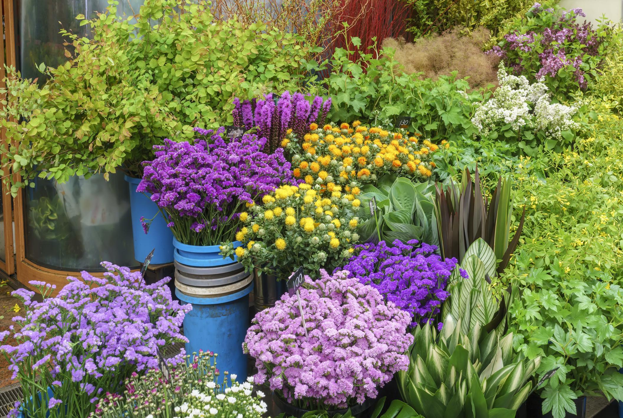 The Flower Farm Caloundra – Inc Freehold