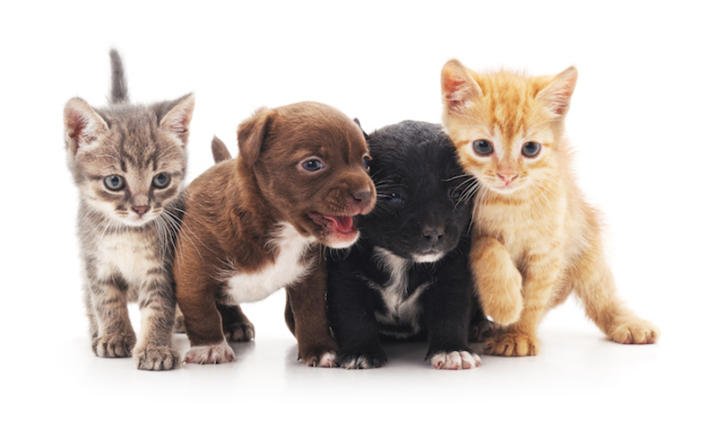 WELL ESTABLISHED AND PROFITABLE PET STORE
