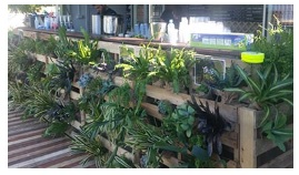 Indoor Plant Hire, Coffee Machine Hire, Water Features, Green Walls Franchise