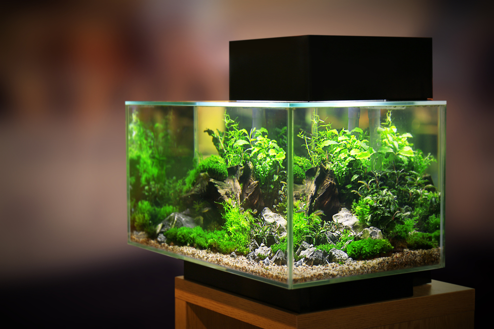 Aquarium and Pet Supply Store Business For Sale South East