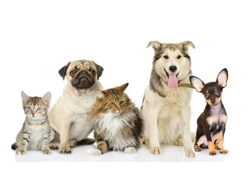 Well Established Veterinary Practice Ipswich