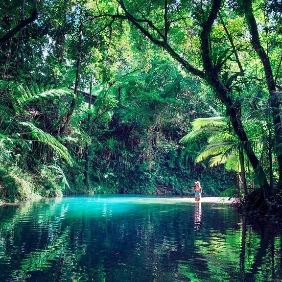 Gem in the World Heritage Daintree Rainforest