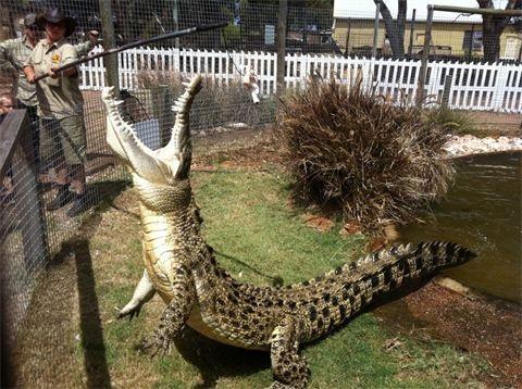 Greenough WA Wildlife Park