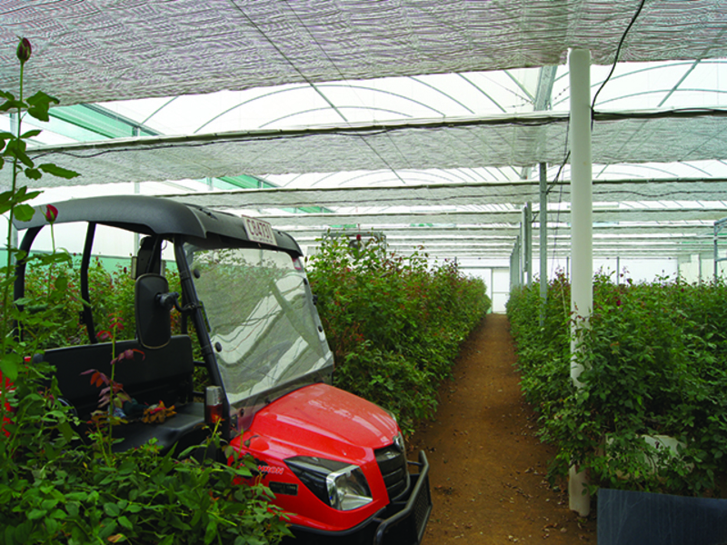 49 Ha Hydroponic Farm currently producing Red Roses and Mallee Eucalyptus with A