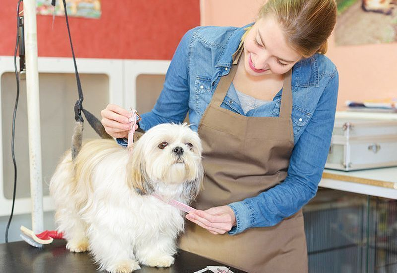 Professional Dog Grooming Salon. Fully equipped. Operating for 11 + years Enquir