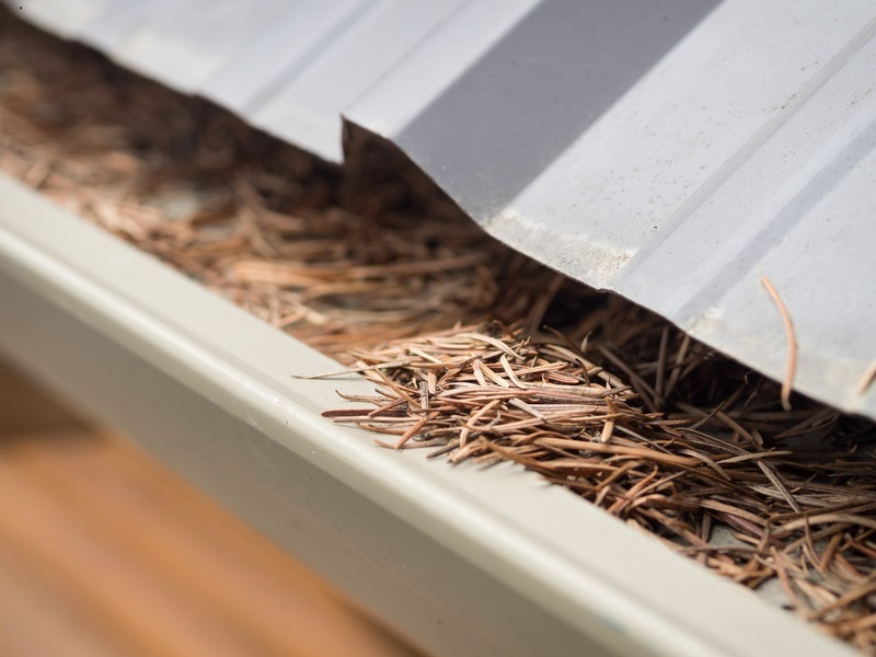 Specialists in Roof and Gutter Maintenance. Gutter Guard Installation. Solar Pan