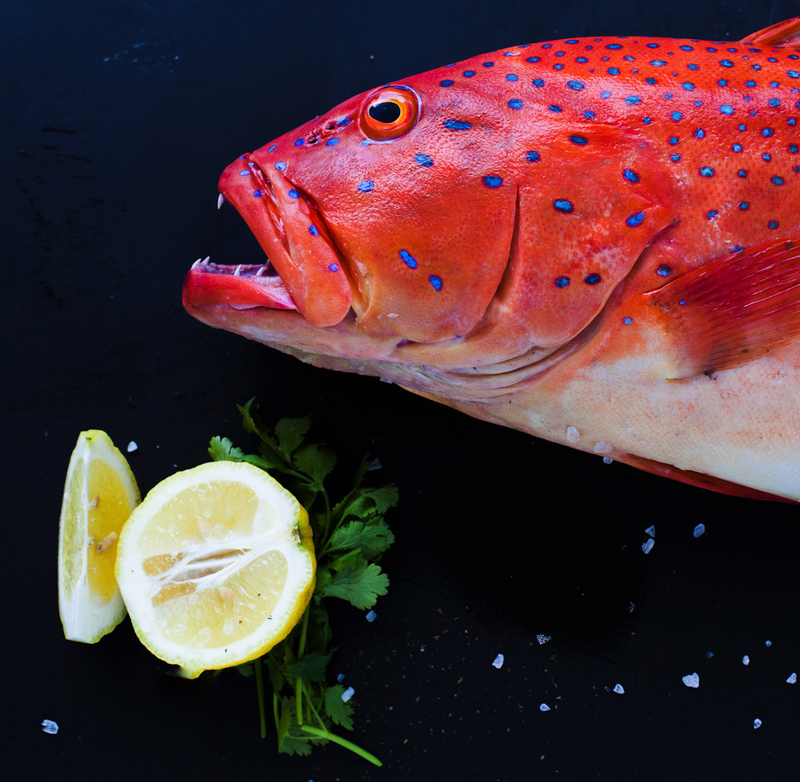 Fresh Seafood Business with direct Supply- PRICE REDUCED