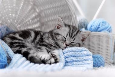 Catmandu Motel for Cats (GLJ1782)