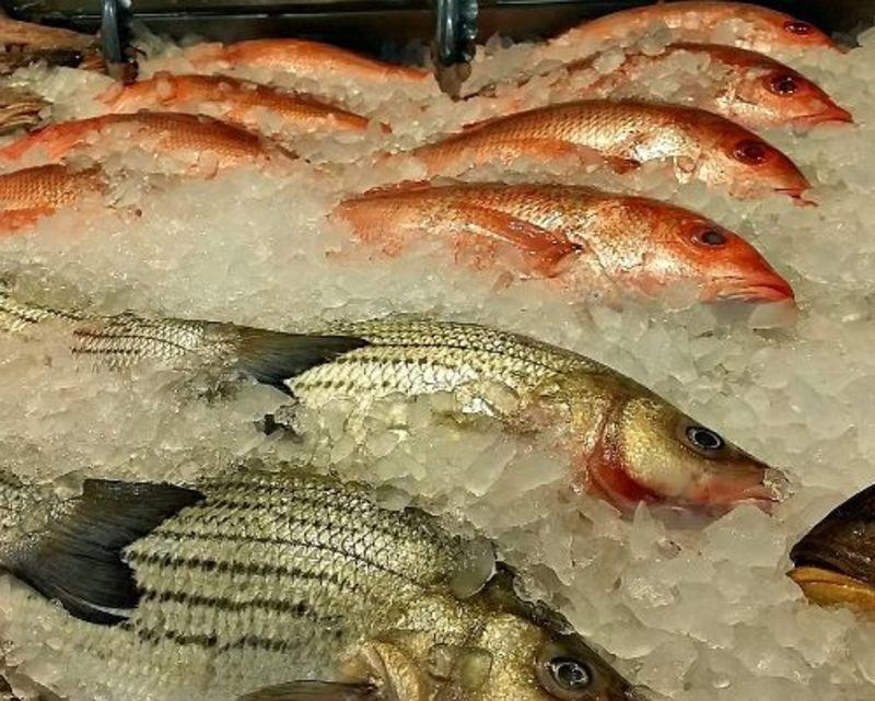 Fresh Fish Outlet  - Victoria Market  (Ref 5932)