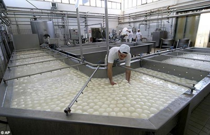 Large Cheese manufacturer. Possible 7000 tonne a year.