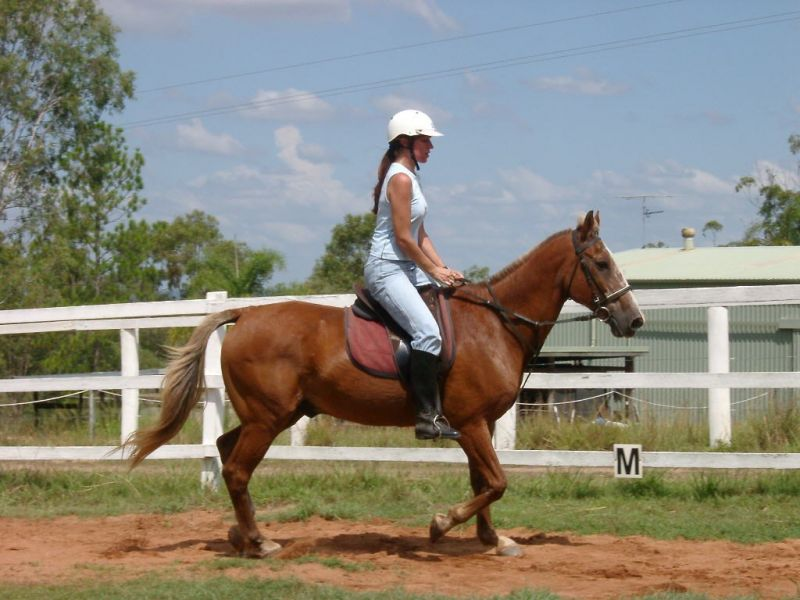 lockyer-valley-horse-riding-farmstay-prop-freehold-with-excellent-infrastructure-5