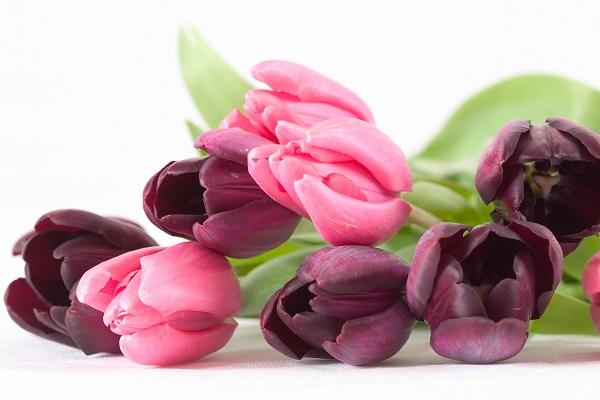 Florist - Retail - Wedding - Gifts - Lower North Shore North Sydney Area