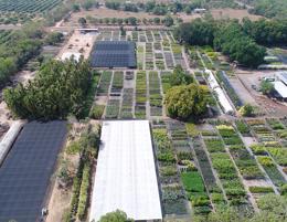 Tropical Plant Nursery