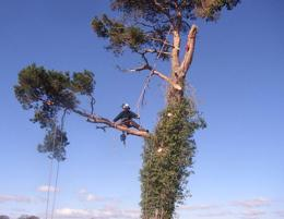 Professional Tree Services business for sale.  Est 35 years