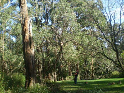 professional-tree-services-business-for-sale-est-35-years-5