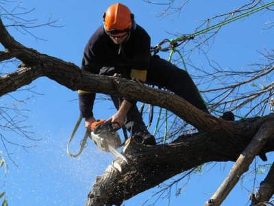 professional-tree-services-business-for-sale-est-35-years-1