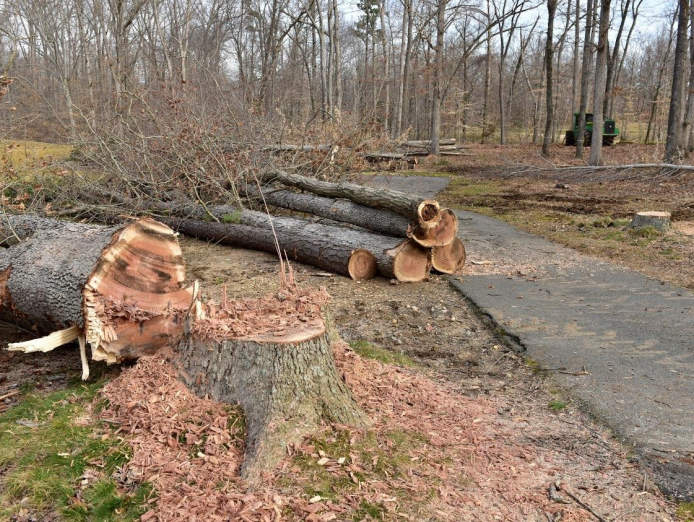professional-tree-services-business-for-sale-est-35-years-3