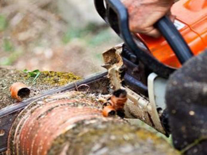 professional-tree-services-business-for-sale-est-35-years-2