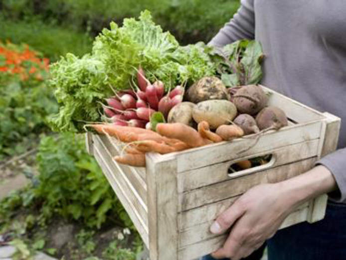fresh-produce-indian-groceries-western-suburbs-sbxa-2